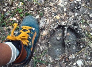 The woods tells us a story: Deer footprint