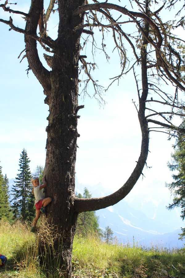 Vita da alberi: Arrampicata su albero secco