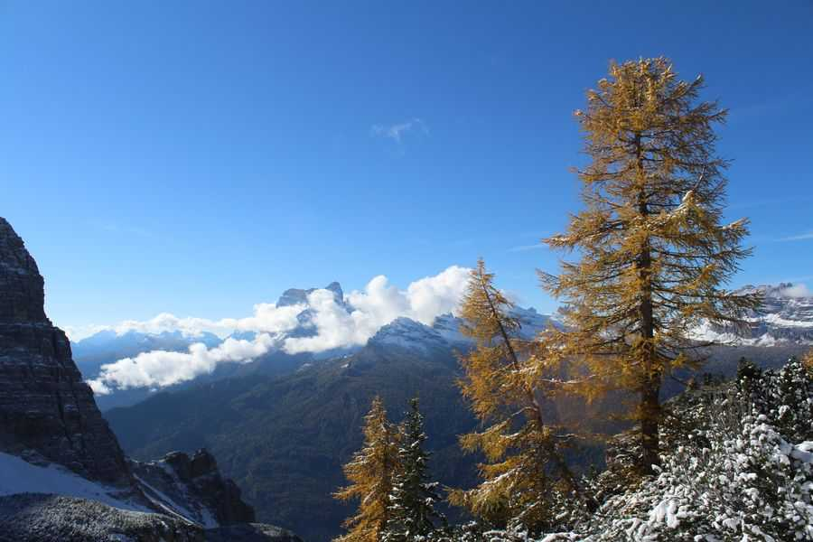 Larches in autumn.